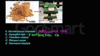 getlinkyoutube.com-Bioteknologi Konvensional (jamur pada pembuatan tempe)
