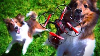 getlinkyoutube.com-Dogs Chasing Drones (Phantom Slow Motion)