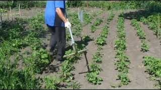 getlinkyoutube.com-Борьба с сорняками. Быстрая прополка междурядья картофеля