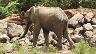 getlinkyoutube.com-Manyara National Park