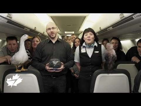 April Fools - WestJet eases restrictions on pets in the cabin with