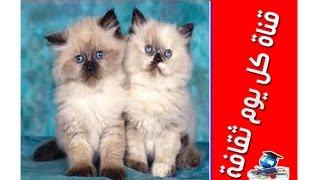 getlinkyoutube.com-الأمراض التي قد تصيب القطط تربية القطط