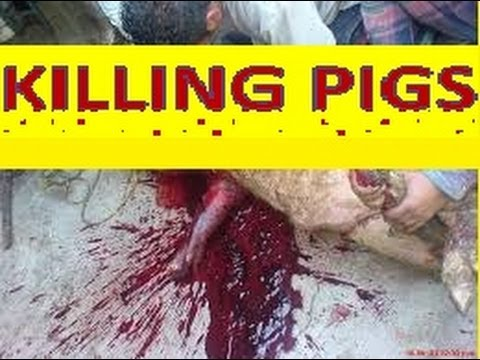 GTA V Online:  KILLING PIGS