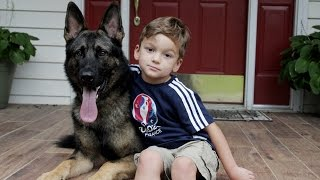 getlinkyoutube.com-Loyal German Shepherd Helps Family With The Chores: SUPERPOWER DOGS
