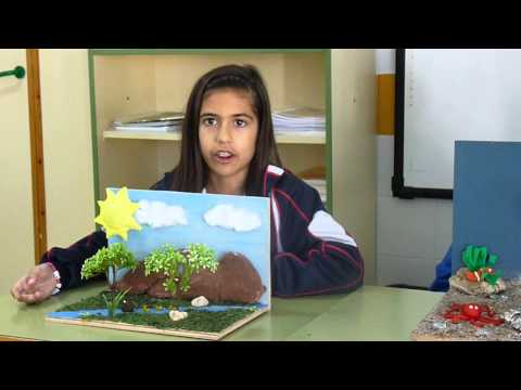 Los ecosistemas: los componentes, ecosistemas marinos y ecosistemas terrestres.