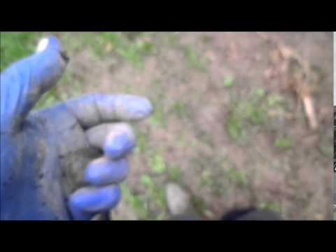metal detecting shropshire uk hunt 7 (first silver 2015)