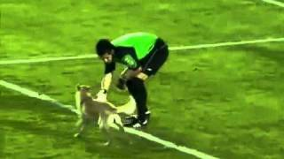 getlinkyoutube.com-Dog Runs Onto Pitch and Can't Be Caught