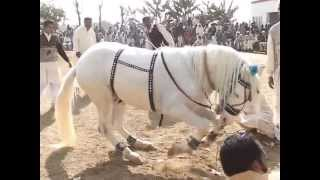 getlinkyoutube.com-gora jalwa dance gujrat pakistan hourse dance