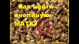 getlinkyoutube.com-как отыскать пчелиную матку для начинающих