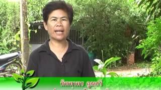 getlinkyoutube.com-รายการสมุนไพร ตอน โด่ไม่รู้ล้ม
