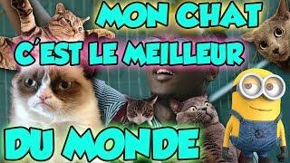 MON CHAT C'EST LE MEILLEUR DU MONDE (Parodie - Black M - Le plus fort du monde)