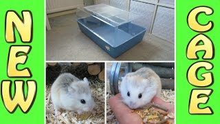 getlinkyoutube.com-BUYING A NEW HAMSTER CAGE AND MY PLANS FOR IT!!!