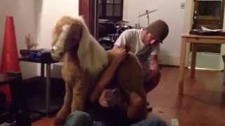 Fucking pony