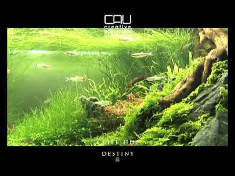 Destiny --- Cliff Hui