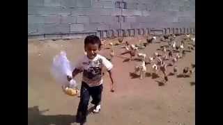 getlinkyoutube.com-طفل سعودي يلحقه الدجاج وهو يبكي (مقطع مضحك )