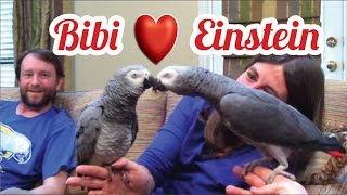 Einstein the Parrot meets Bibi the Bird