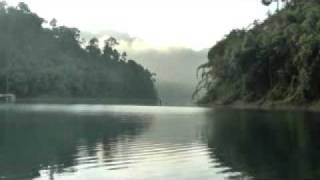 getlinkyoutube.com-Gibbon calls at sunrise. Khao Sok National Park. Surat Thani. Thailand.