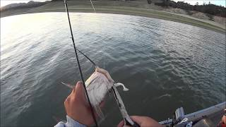 White/Spotted Bass Action Lake Nacimiento, CA 05-02-2014