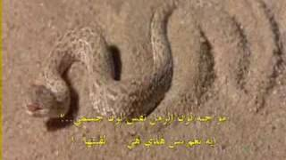 getlinkyoutube.com-Desert Snake