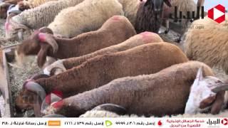 getlinkyoutube.com-أسواق العجول والاغنام بالاسكندرية