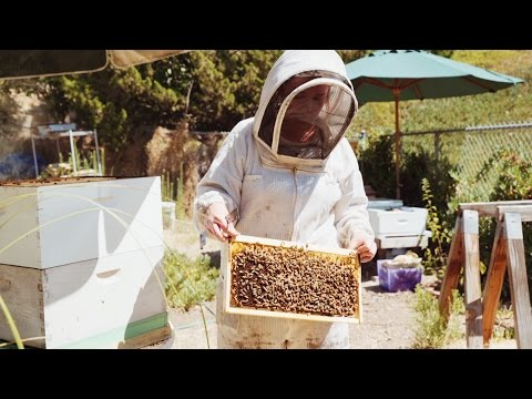 Learn how to listen to your bees with Hilary Kearney, Girl Next Door Honey (video)