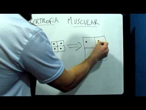 hipertrofia muscular un tipo de crecimiento de las fibras musculares