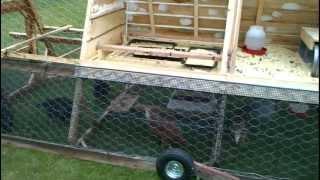 getlinkyoutube.com-Chicken Tractor interior