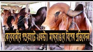 getlinkyoutube.com-hot Cow Haat কোরবানীর পশুর হাটে ২৪ঘন্টা।