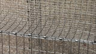 getlinkyoutube.com-How to Build an All Wire Rabbit Cage