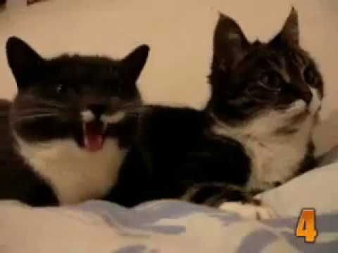 10 videos tiernos de gatos de 2011.wmv
