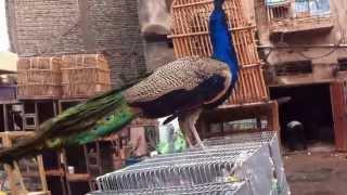 getlinkyoutube.com-سوق الغزل في بغداد 11/1/2014