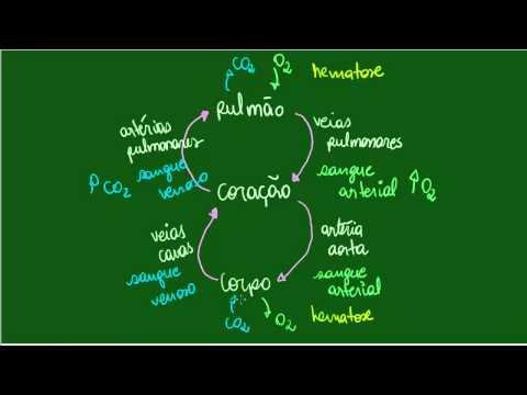 Circulação do Sangue - Grande Circulação - Fisiologia - Biologia
