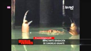 getlinkyoutube.com-Cangrejo gigante en Inglaterra