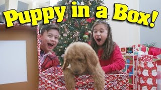 getlinkyoutube.com-PUPPY IN A BOX! Christmas Haul & Surprise Unboxing ft. PuppyTube!