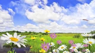 Футаж поле с цветами