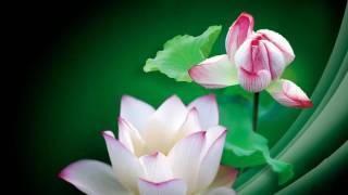 getlinkyoutube.com-夏日賞荷花 Beautiful Lotus Flowers/音樂: 耶和華祝福滿滿