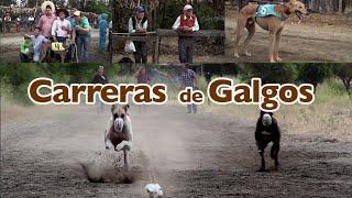 """getlinkyoutube.com-""""Carrera de Galgos"""" Capítulo 6 Serie web Tradiciones."""