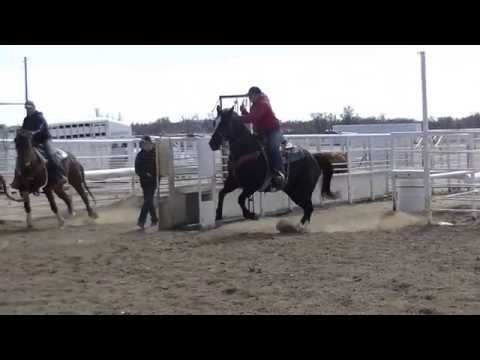 Lena Ropn Casino - *For Sale* '08 AQHA Black Gelding. Team Roping, head horse!