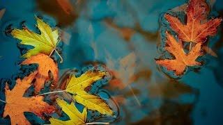getlinkyoutube.com-Runo - Elegant Touch Autumn 2016
