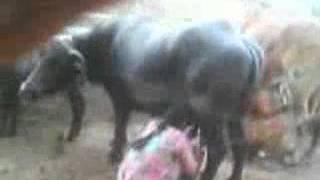 getlinkyoutube.com-5  MARWARI VIDEOS MANSINGHBHATI 9828265371