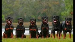 Rottweiler's, The Best Dogs