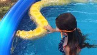 getlinkyoutube.com-Girl swims with huge Burmese python