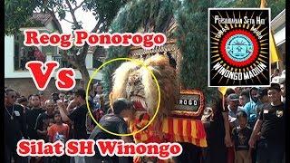 getlinkyoutube.com-Reog Ponorogo Kesurupan Hampir Makan Penari