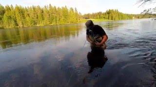 getlinkyoutube.com-Flyfishing Rena 2015. Dryfly fishing Norway.