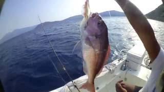 getlinkyoutube.com-ψαρεμα φαγκρια ! αμα τα ψαρια ειναι απο κατω !!!!