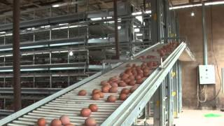 getlinkyoutube.com-Hellmann Poultry cage in Nigeria