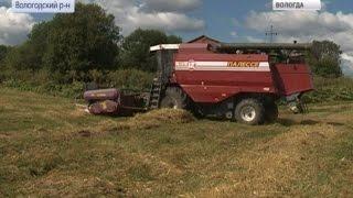 getlinkyoutube.com-Вопреки неблагоприятной погоде, в  области началась уборка зерновых