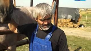 Florian, calul de rasa a lui Florentin Grabovski, Moldova