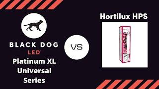 getlinkyoutube.com-First 1000 watt HID vs. LED Grow Light Timelapse | Black Dog LED vs. Hortilux HPS Flowering MMJ
