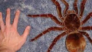 getlinkyoutube.com-Snakes vs Spiders!